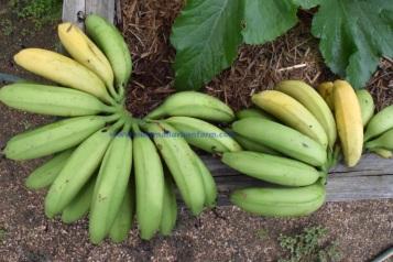 banana-hands