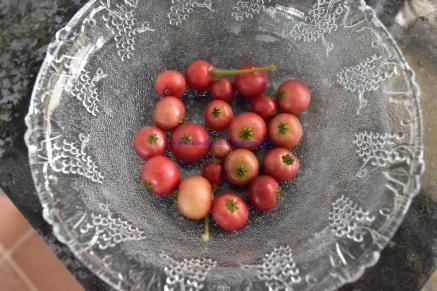 panama-berry-daily-pick