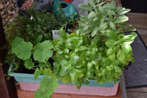 seedling-tray