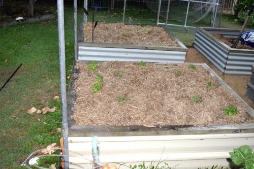 seedlings-planted-1