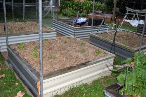 seedlings-planted-2