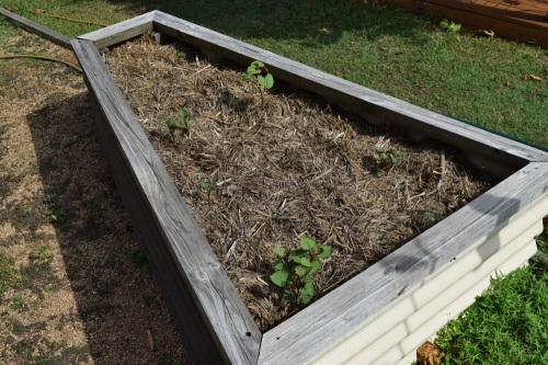sweet-potato-plot