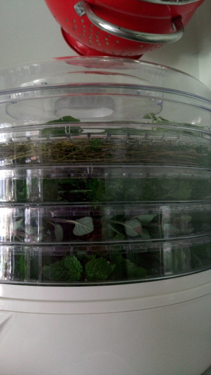 Herb layers in the dehydrator